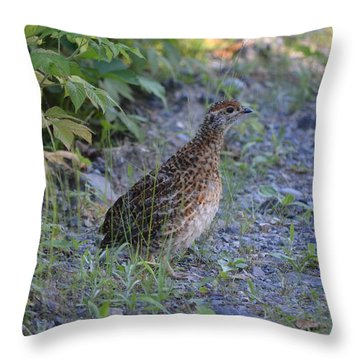 Throw Pillow featuring the photograph Spruce Grouse by James Petersen