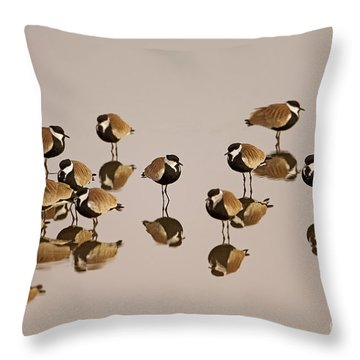 Spur-winged Lapwing Vanellus Spinosus Throw Pillow
