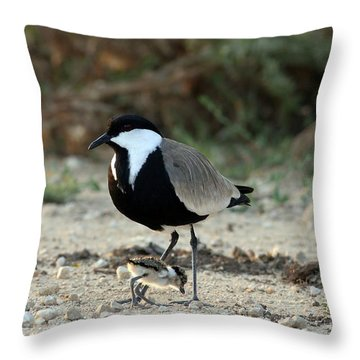 Spur-winged Plover And Chick Throw Pillow
