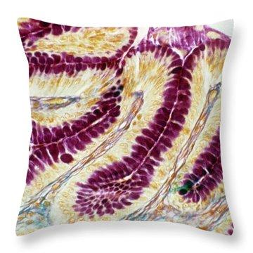 Light Micrograph Throw Pillows