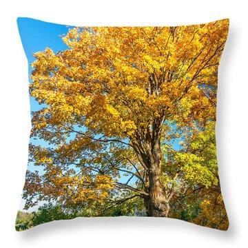Sugar Maple 2 Throw Pillow by Steve Harrington