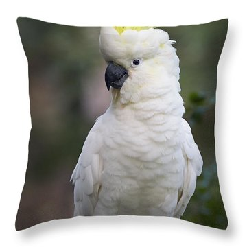 Sulphur-crested Cockatoo Displaying Throw Pillow