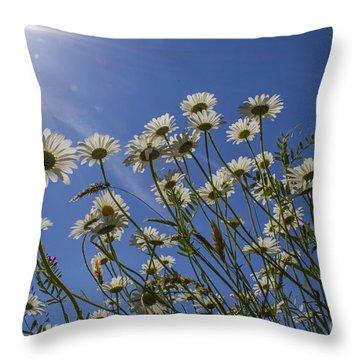 Sun Lit Daisies Throw Pillow by Brian Roscorla