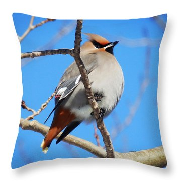 Sunbathing Throw Pillow by Zinvolle Art