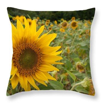Sun Flower Fields Throw Pillow by Miguel Winterpacht