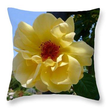Sunny Yellow Rose Throw Pillow