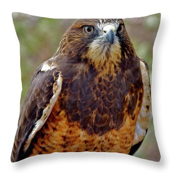 Swainson's Hawk Throw Pillow by Ed  Riche