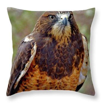 Swainson's Hawk Throw Pillow