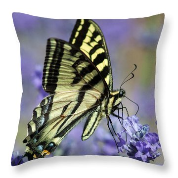 Swallowtail Butterfly Throw Pillow by Jack Bell