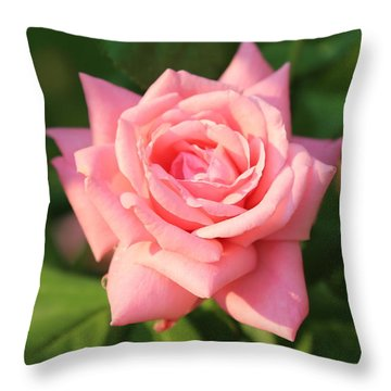 Sweet Pink Rose Throw Pillow by Carol Groenen