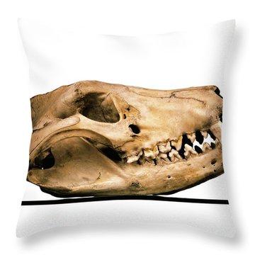 Preservation Throw Pillows