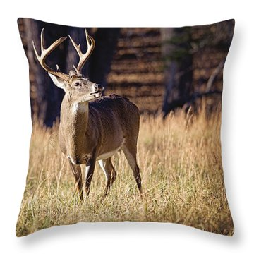 The Buck Throw Pillow by Laurinda Bowling