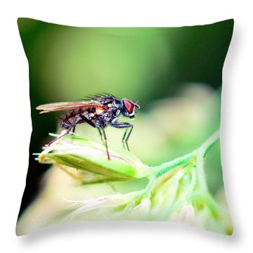 The Fly Throw Pillow by Tommytechno Sweden