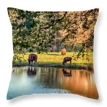 Thirsty Bison Throw Pillow by Sennie Pierson