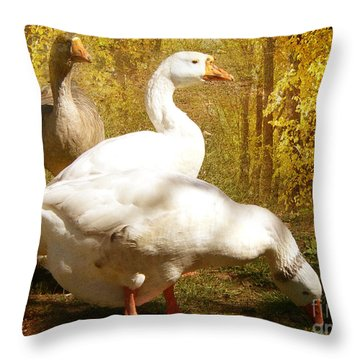 Throw Pillow featuring the photograph Three Geese A Grazing by Chris Armytage
