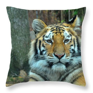 Tiger Bronx Zoo Throw Pillow by Diane Lent