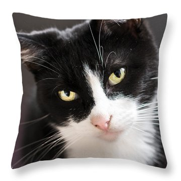 Tiggles Throw Pillow by Nick Kirby