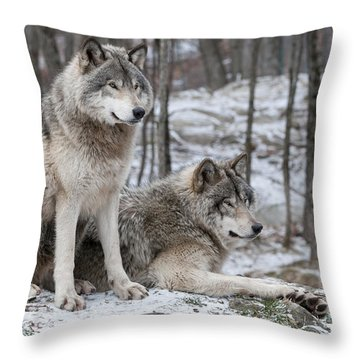 Timber Wolf Pair In Forest Throw Pillow