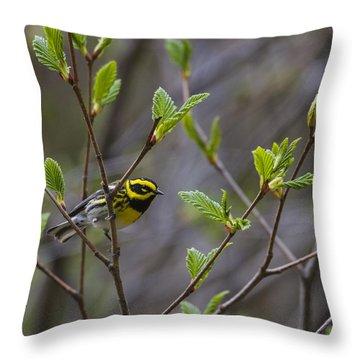 Townsends Warbler Throw Pillow