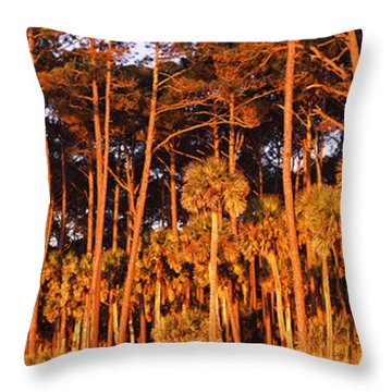 Trees, Hunting Island State Park Throw Pillow