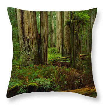 Trees In A Forest, Hoh Rainforest Throw Pillow