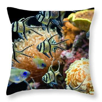 Tropical Wonderland - Banggai Cardinalfish Throw Pillow by Jamie Pham