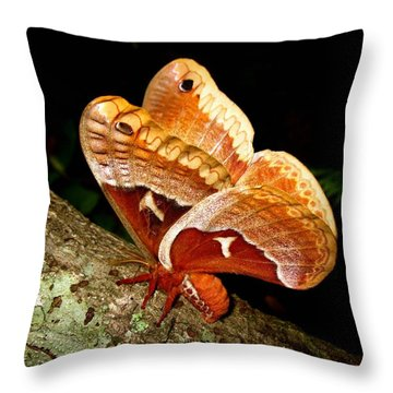 Tuliptree Silkmoth Throw Pillow by William Tanneberger