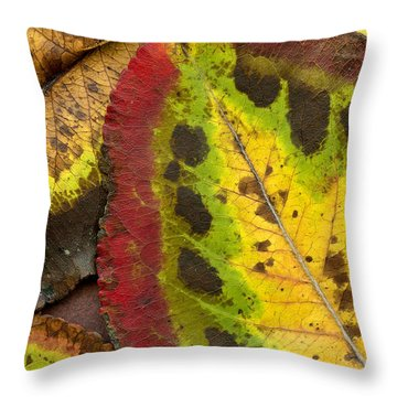 Turning Leaves Throw Pillow by Stephen Anderson