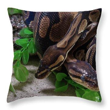 Two Burmese Pythons Python Bivittatus Throw Pillow