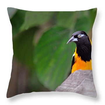 Venezuelan Troupial Throw Pillow