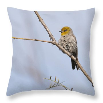 Verdin Throw Pillow