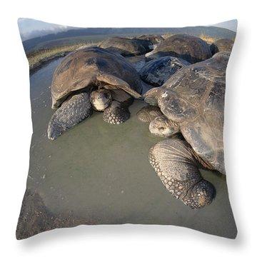 Volcan Alcedo Giant Tortoises Wallowing Throw Pillow by Tui De Roy