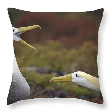 Waved Albatross Courtship Display Throw Pillow by Tui De Roy