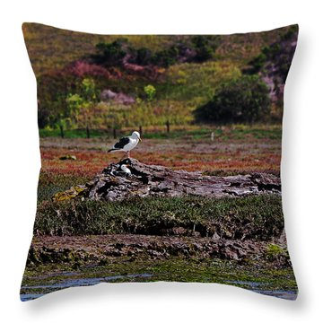 Western Gulls Nesting In A Log Throw Pillow by Susan Wiedmann