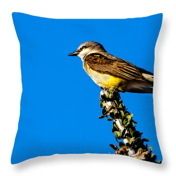 Western Kingbird Throw Pillow by Robert Bales
