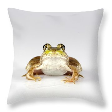 Throw Pillow featuring the photograph What You Looking At? by John Crothers