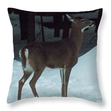 White Tail Deer Throw Pillow by Brenda Brown