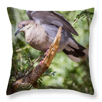 White-winged Dove Throw Pillow by Beverly Parks