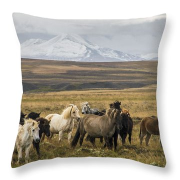 Wild Icelandic Horses Throw Pillow