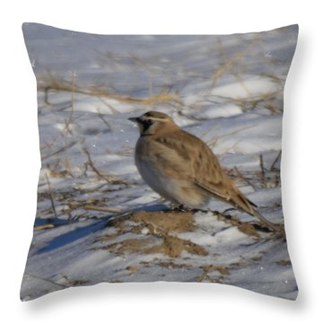Winter Bird Throw Pillow by Jeff Swan