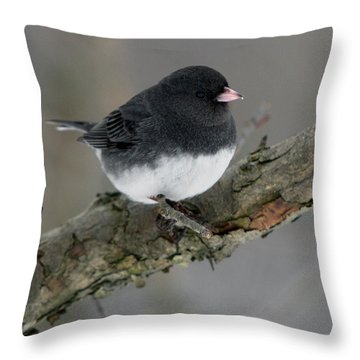 Winter Junco Throw Pillow by Timothy McIntyre