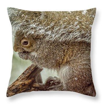 Winter Squirrel Throw Pillow by LeeAnn McLaneGoetz McLaneGoetzStudioLLCcom