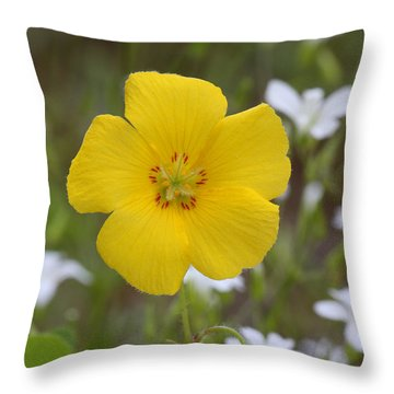Wood Sorrel And Sandwort Throw Pillow by Daniel Reed
