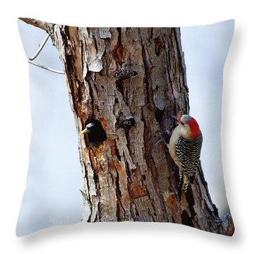 Woodpecker And Starling Fight For Nest Throw Pillow by Gregory G. Dimijian
