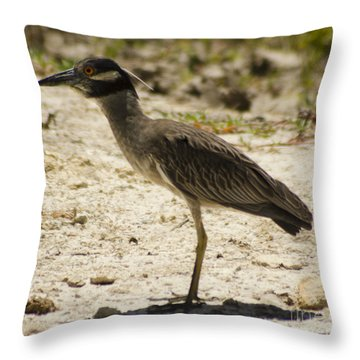 Yellow-crowned Night-heron Throw Pillow