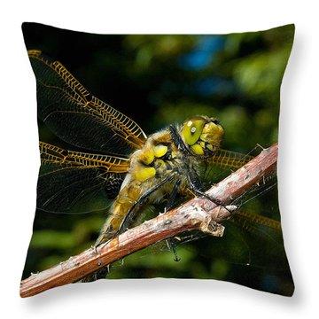 Yellow Dragon Throw Pillow by WB Johnston