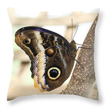 Yellow-edged Giant Owl Butterfly #4 Throw Pillow by Judy Whitton