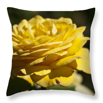 Yellow Rose Throw Pillow by Steve Purnell