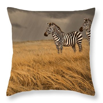 Zebra Trio Throw Pillow by Aaron Blaise