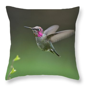 Anna's Hummingbird Throw Pillow